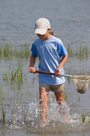 Explore the marsh ecosystem.